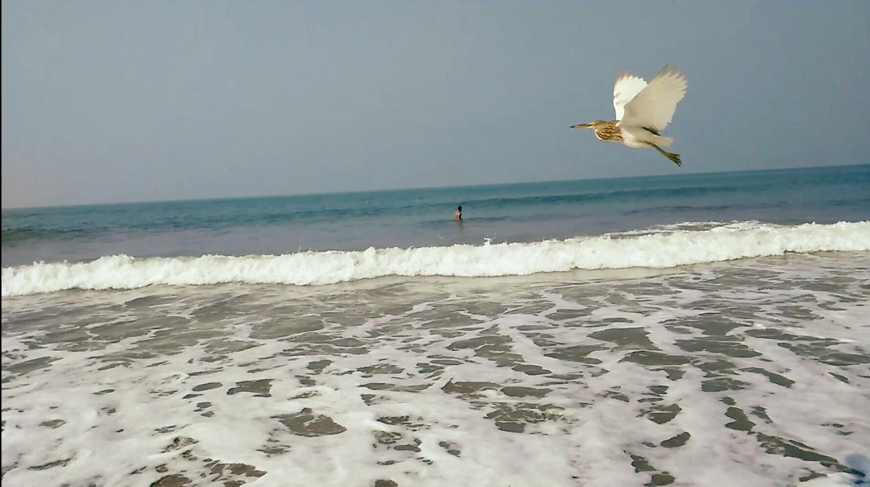 Birds at sea - Arambol Beach